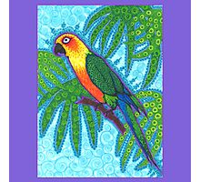 Ronnell's Parrot Photographic Print