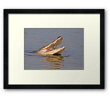 Alligator catches blue crab for breakfast Framed Print