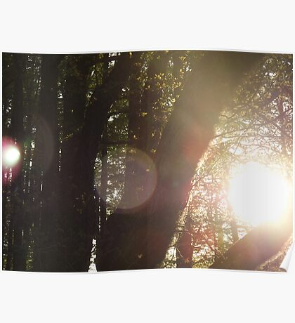 The Sun Through The Trees 2 Poster