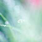 morning dew by Ingrid Beddoes