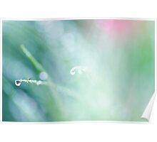 morning dew Poster