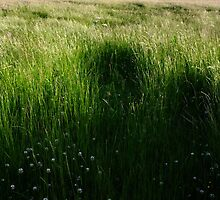 Corn Riggs Grasses S0010001 by ragman