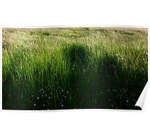 Corn Riggs Grasses S0010001 Poster
