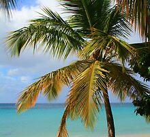 Caribbean Palm by Roupen  Baker