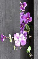 Floral decorations by Enri-Art