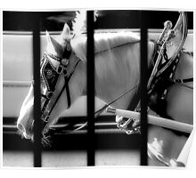 Working Horse And Fence Poster