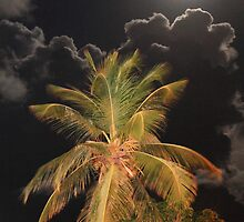 Full Moon over Tropical Palm by Roupen  Baker