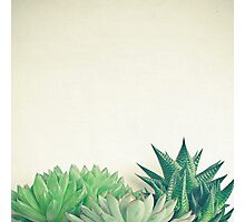 Succulent Forest Photographic Print