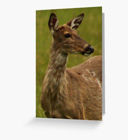 Deer Bust Portrait Greeting Card