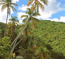 Towering Palms by Roupen  Baker