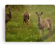 Three Deer Metal Print