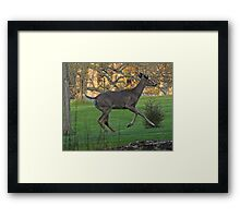 Running White-Tailed Buck Framed Print