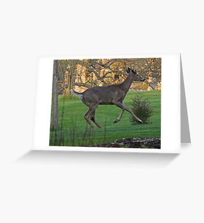Running White-Tailed Buck Greeting Card