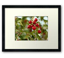Cherries on the Cherry Tree Framed Print