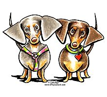 Double Dapple Dachshunds Photographic Print