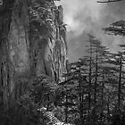 Mountain and pines. by elky