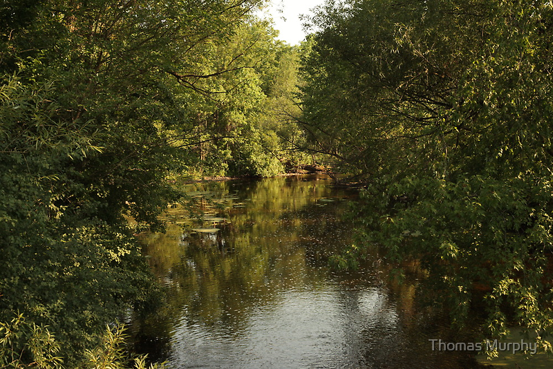 The Bark River by Thomas Murphy