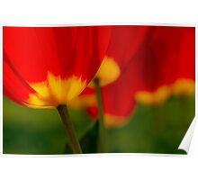 Five Red Tulips Poster