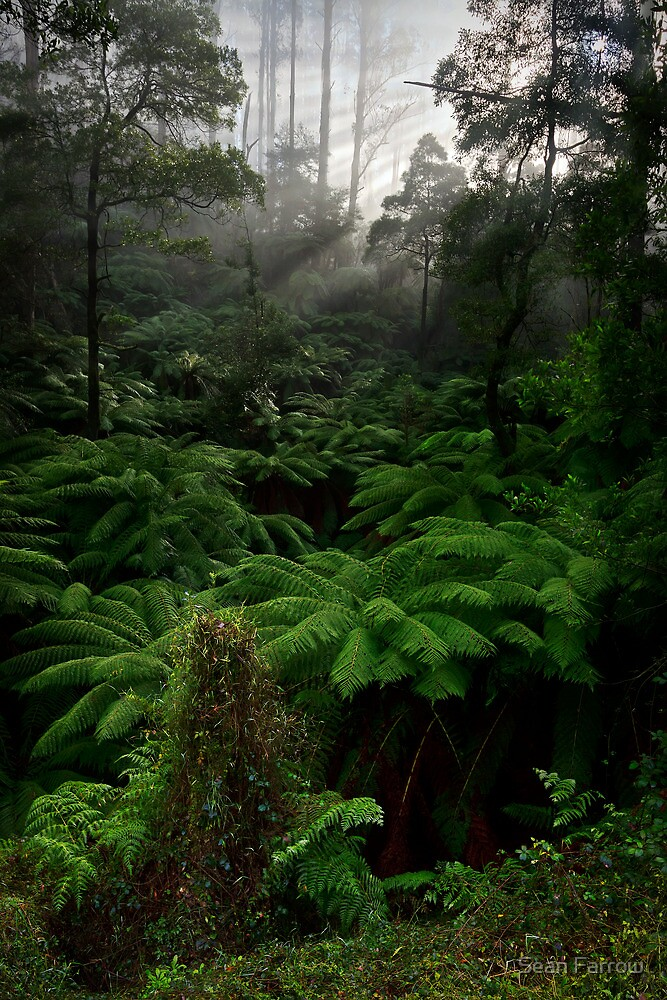 Break On Through... - Black Spur, Victoria, Australia by Sean Farrow
