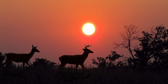 Sunset  Silhouette by David Dehner
