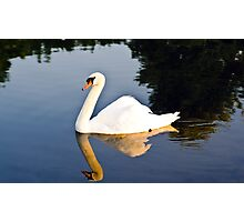 Swan on the Pond Photographic Print