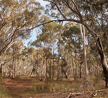 Looking through the gums Maldon Vic Australia by Margaret Morgan (Watkins)