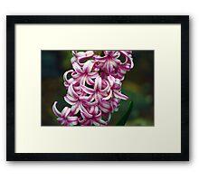 Floresindas Framed Print