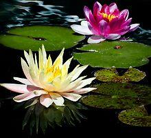 Water Lilies  by Saija  Lehtonen