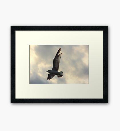 """""""For The Birds""""  Framed Print"""