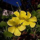 Splash of yellow by Matthew Walmsley-Sims