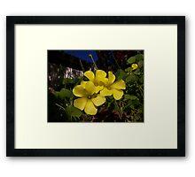 Splash of yellow Framed Print