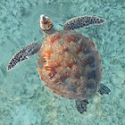 Turtle in the shallows by Neville Gafen
