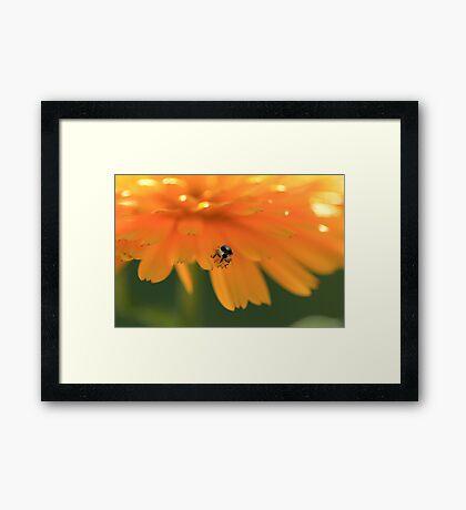 Bug - can you identify? Framed Print