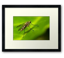 Insect detail Framed Print