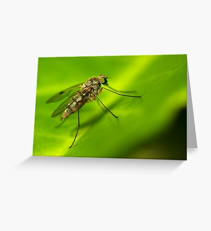 Insect detail Greeting Card