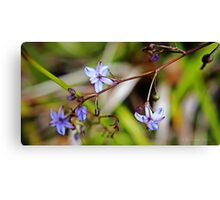 Purple and white flower  Canvas Print