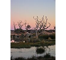 Mungerannie Wetlands at Dusk 2 Photographic Print