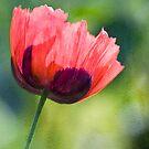 Poppy Bright  by DIANE  FIFIELD