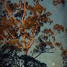 Sunset & moonrise, Taree NSW by ozzzywoman