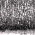 Winter Willow Thicket, Hume, ACT, Australia by Martin Lomé