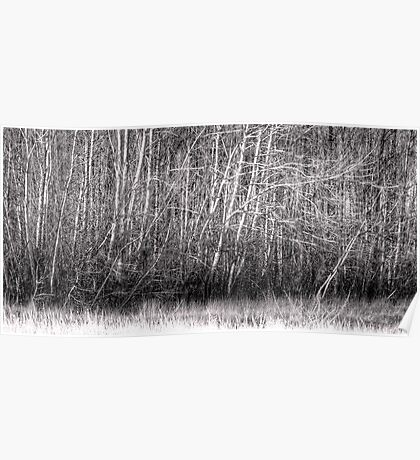 Winter Willow Thicket, Hume, ACT, Australia Poster