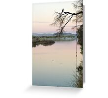 Roosting Cormorant - Evening 2nd July 2012 Greeting Card