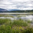 Shuswap Lake from Salmon Arm by Philip Kearney