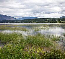 Shuswap Lake from Salmon Arm by Philip Kearney