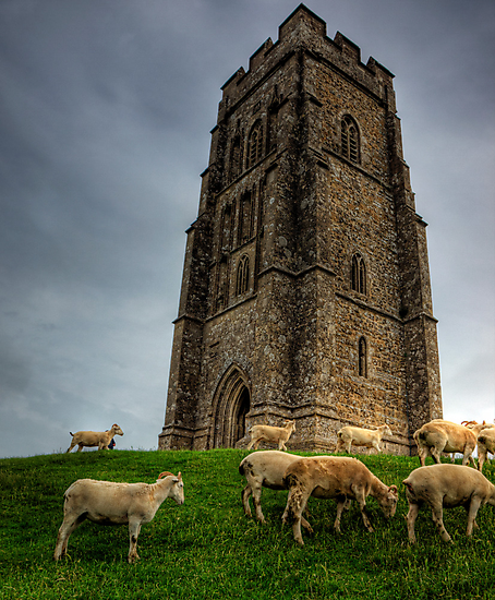Sheep grazing on Glastonbury Tor by NeilAlderney