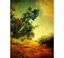 Bush Walks Photographic Print