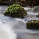 Cement Creek  by Alex Colcheedas