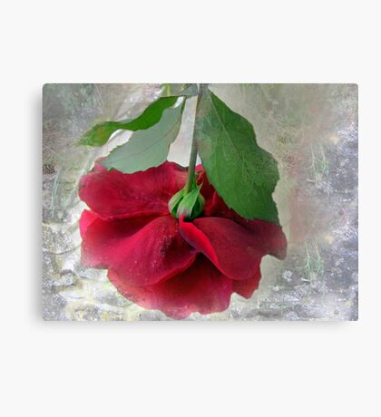 When the world seems in a jumble ... stop and smell a rose! Canvas Print