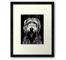 Hazard - Our Irish Wolfhound Framed Print