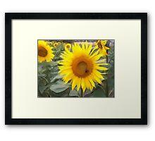 Sonnenblume Framed Print
